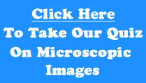 Microscopic images quiz