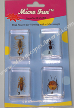 Bug Blocks Specimens Set MSA-B3