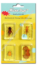 Bug Blocks Specimens Set MSA-B4